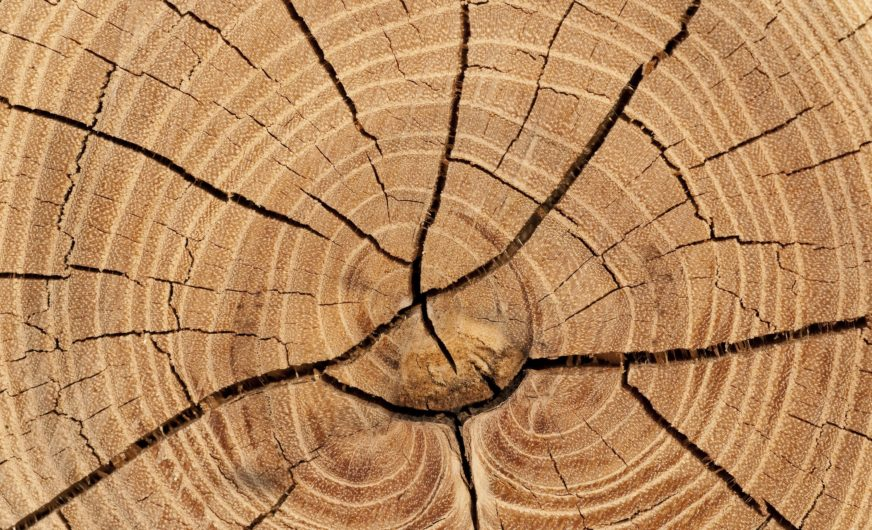 Österreichs Holzindustrie braucht freien Grenzverkehr für Exporte